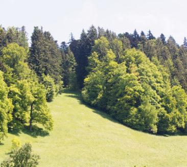 Themenweg Rotenberg