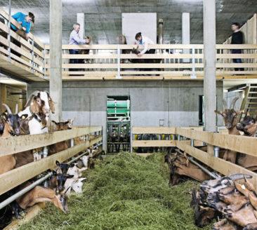 Bauernhof be-greifen - Metzler Molke und Käse © Metzler / naturhautnah.at