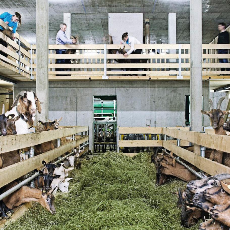 Bauernhof be-greifen in Egg