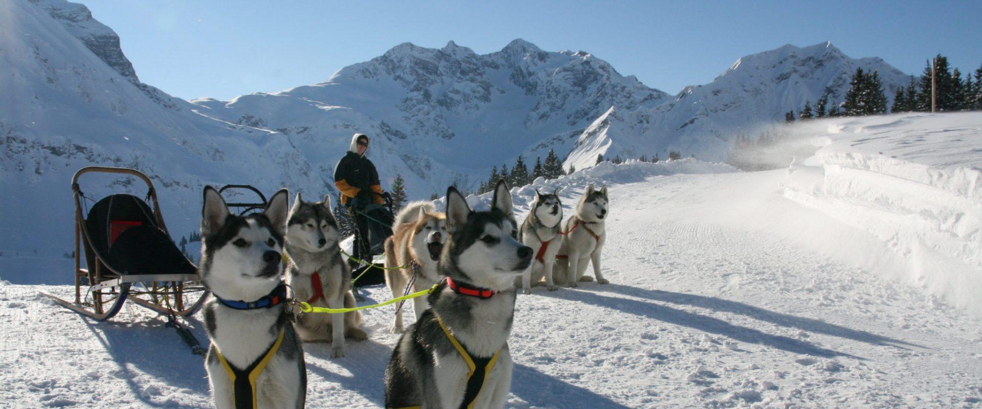 Husky Tour © Marc Van Landeghem / Bregenzerwald Tourismus