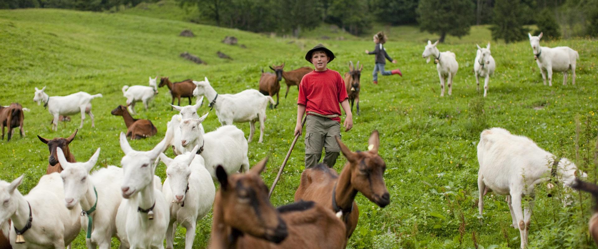 Kinder und Ziegen © Andreas Riedmiller / Bregenzerwald Tourismus