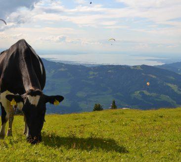 Niedere © Jasmin Feuerstein / Andelsbuch Tourismus