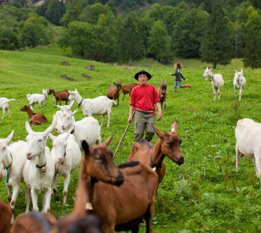 Kinder und Ziegen © Andreas Riedmiller_Bregenzerwald Tourismus