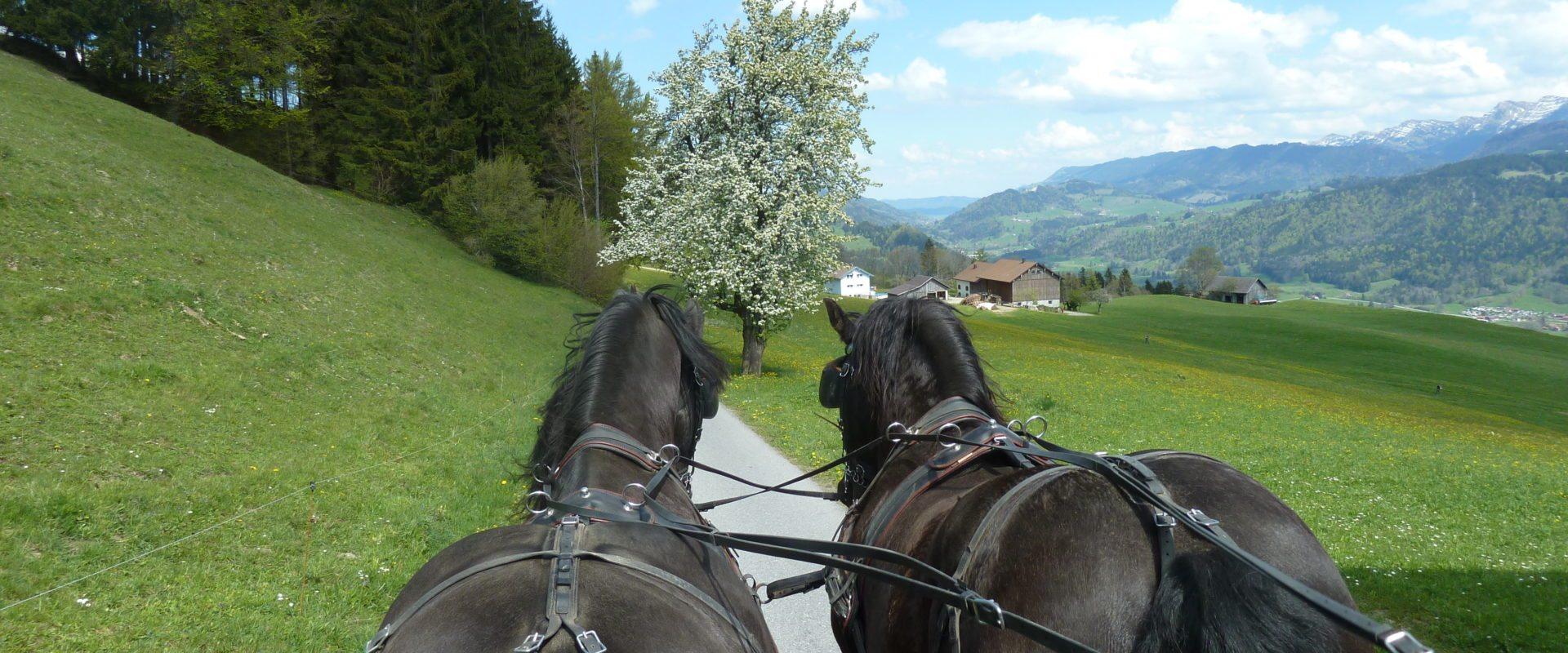 pferdekutschen_sulzberg