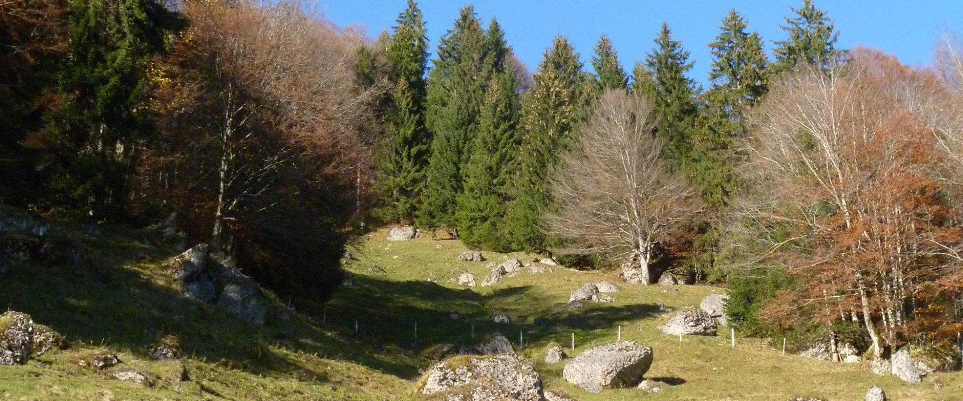 Herbststimmung Nagelfluh © Piazza & Bilgeri / Hittisau Tourismus