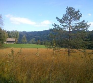Langen – Witmoos European nature reserve