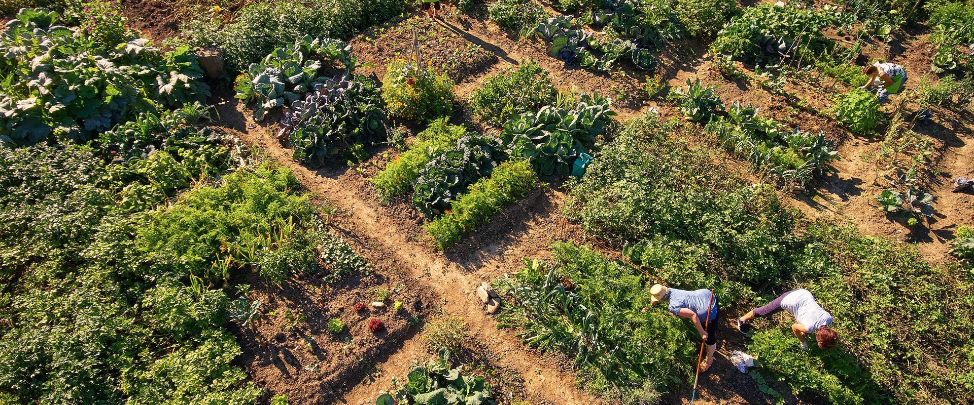 Aus dem Garten in die Küche: Gemüse!